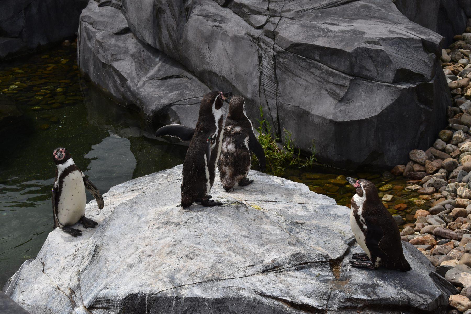 Wildlands Pinguïns